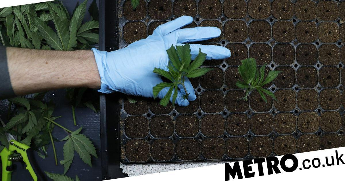 It's now time for the UK to legalise cannabis in its entirety