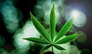 Learn How to grow Cannabis Yourself • r/Cannabis_Culture