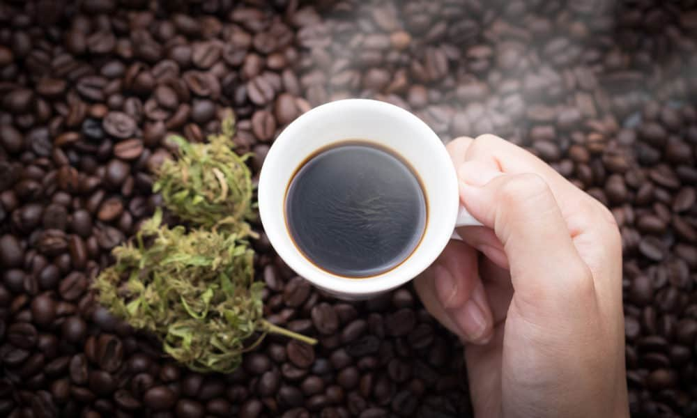 Research Reveals Link Between Coffee, Cannabis and Brain Function