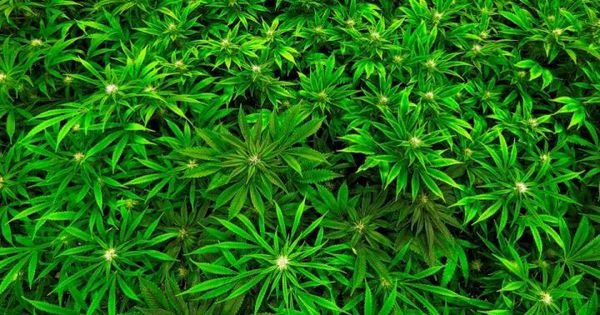 These Four States Could Legalize Some Form Of Marijuana In November