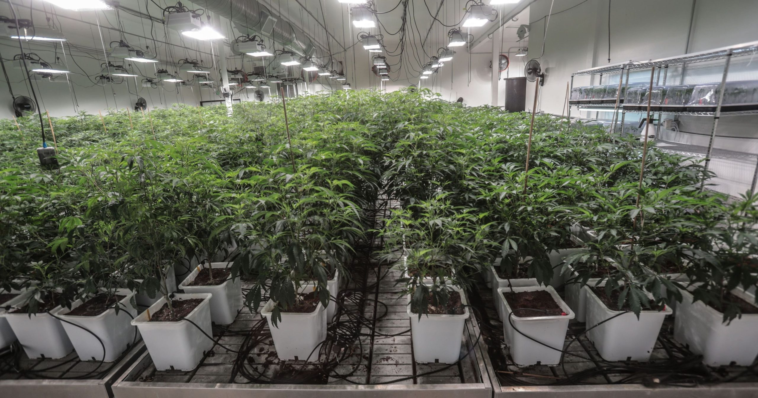College of the Desert to push local cannabis industry to higher ground with new program