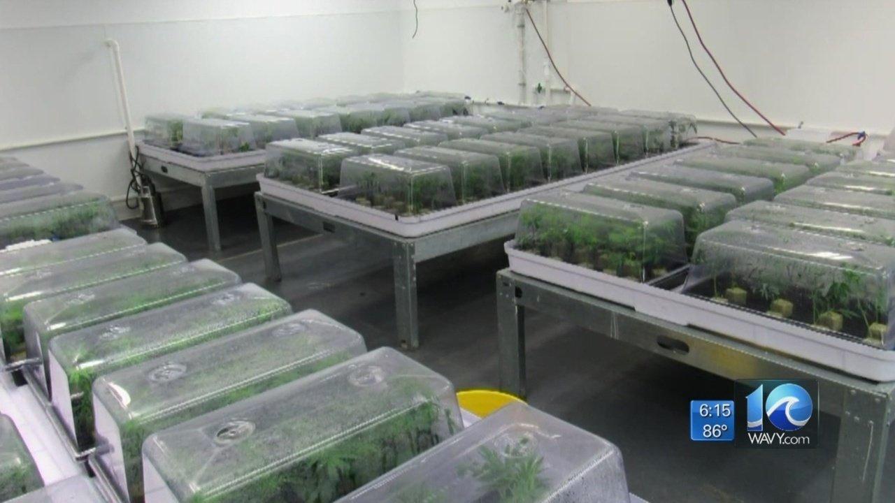 First medical marijuana dispensary in Virginia could be in Hampton