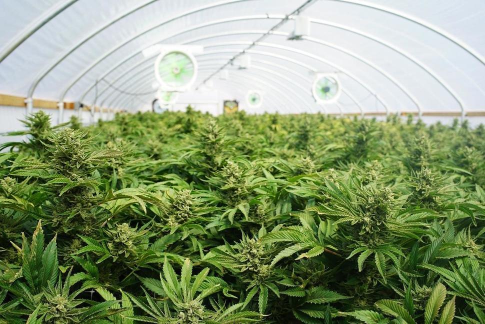 Recreational Marijuana: A Business Boon for States?