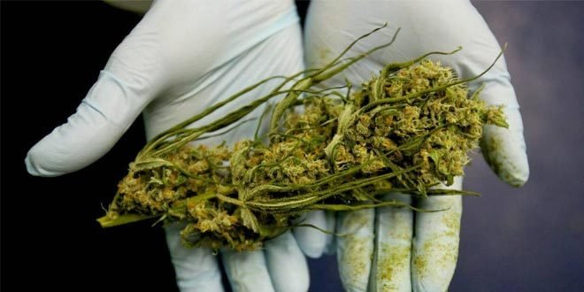 This Happens to the Human Body With Use of Medical Marijuana