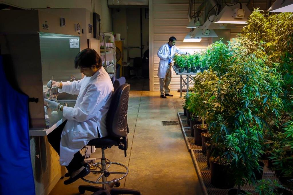 University of California Irvine receives $9 million federal grant to study how cannabis affects young people's brains.