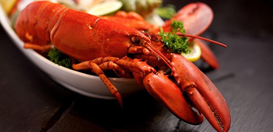 Maine Investigates Restaurant That Allegedly Gave Marijuana To Lobsters
