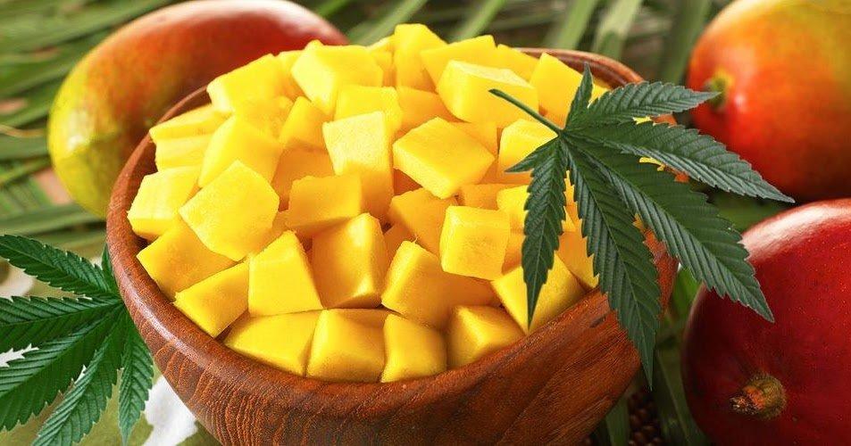 Mango and Marijuana A Marriage Made In Nirvana