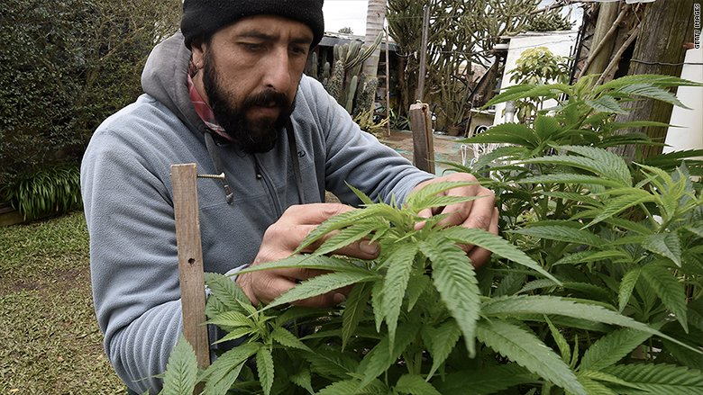 The first country to legalize pot is taking it slow
