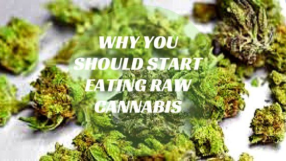 Why you Should Start Eating Raw Cannabis