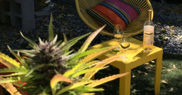 Wine And Weed Tours Pair California's Top Pleasure Crops