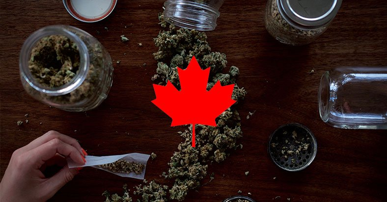 Canada Legalized Marijuana To Combat Organized Crime