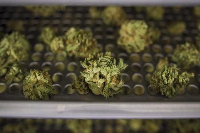 Cannabis delays could push Ontario consumers to black market: critics