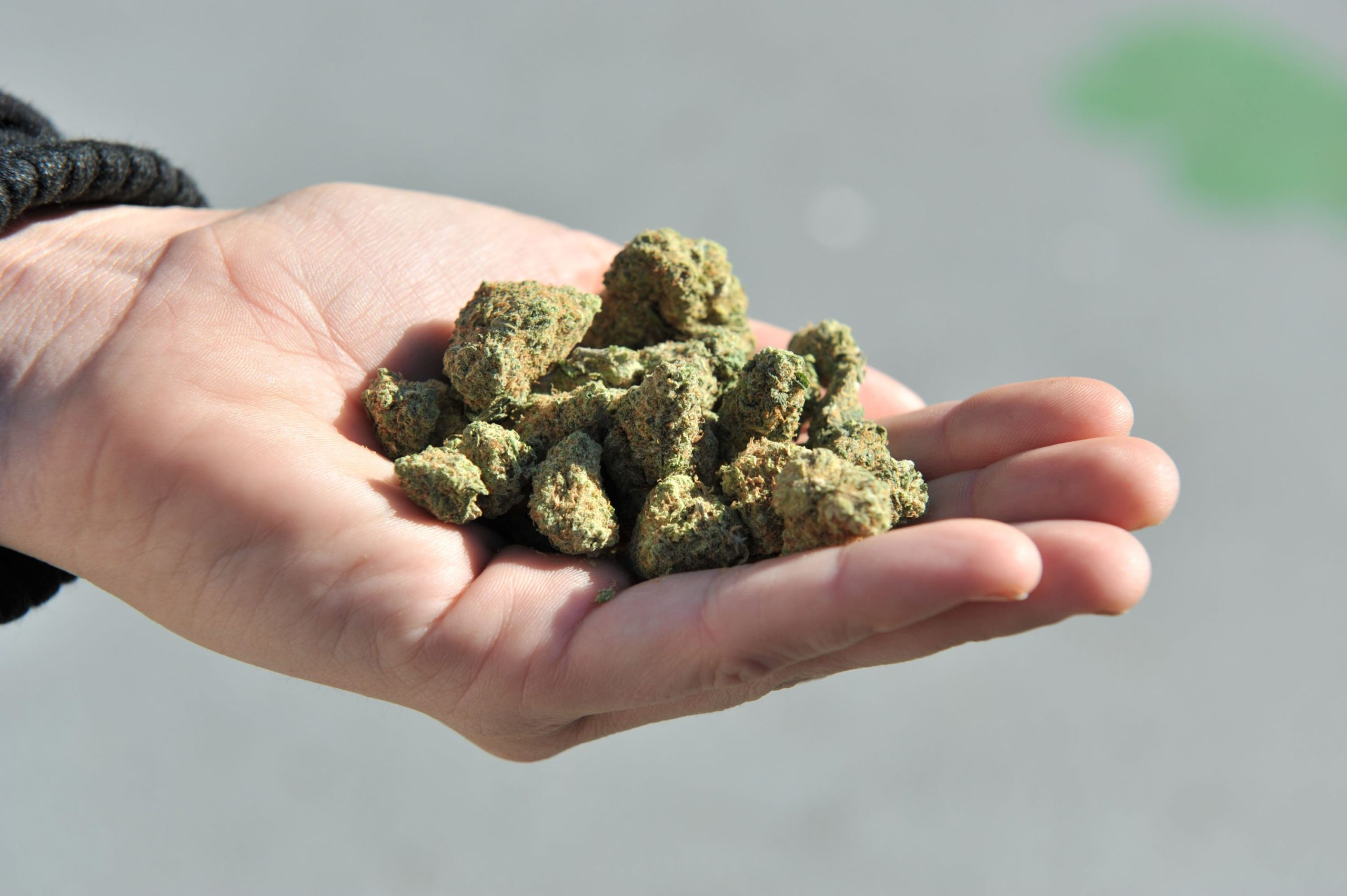 Colorado Lawsuit Over Marijuana Production Smell Relies on RICO Act