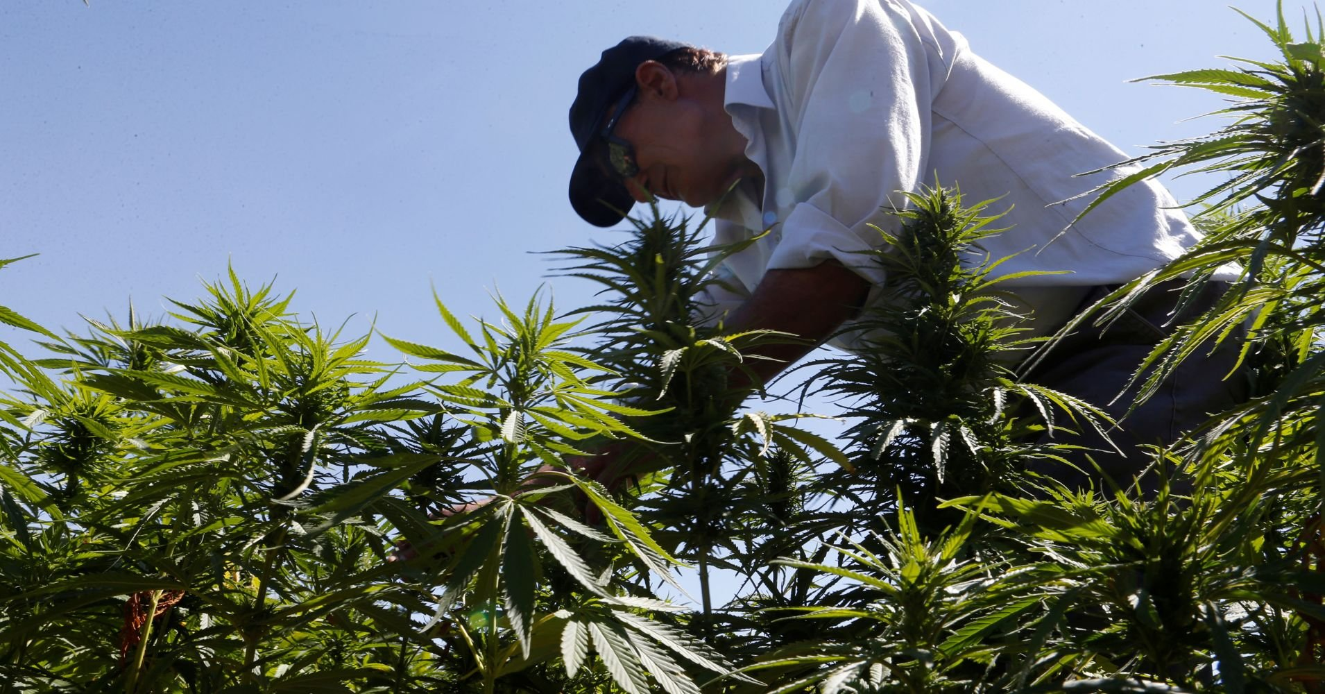 It's inevitable that marijuana will be decriminalized the US, says CEO of $43 billion alcohol company