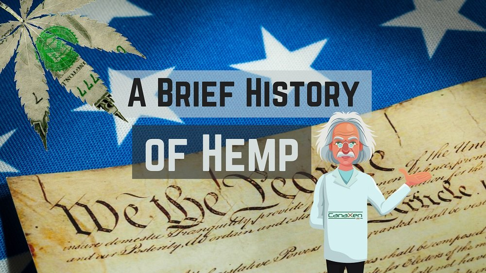A Brief History of Hemp - you may think you know it all - this blog may surprise you! If not your a hemp genius anyway, what you reading this for?!