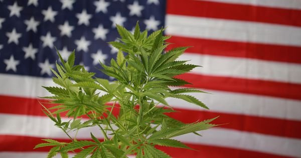 ALL-TIME RECORD: 20 candidates running for governor back FULL marijuana legalization—and far more support medical legalization and decriminalization
