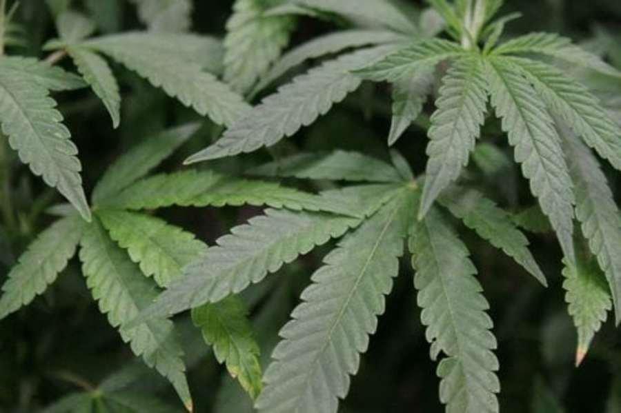 How Wisconsin voted on marijuana.