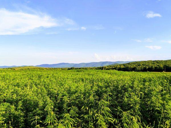 Legal marijuana farm Dragonfly Biosciences set to supply medical cannabis to the UK