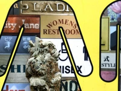 Marijuana Stocks, ETFs, Top News And Data From The Cannabis Industry This Week