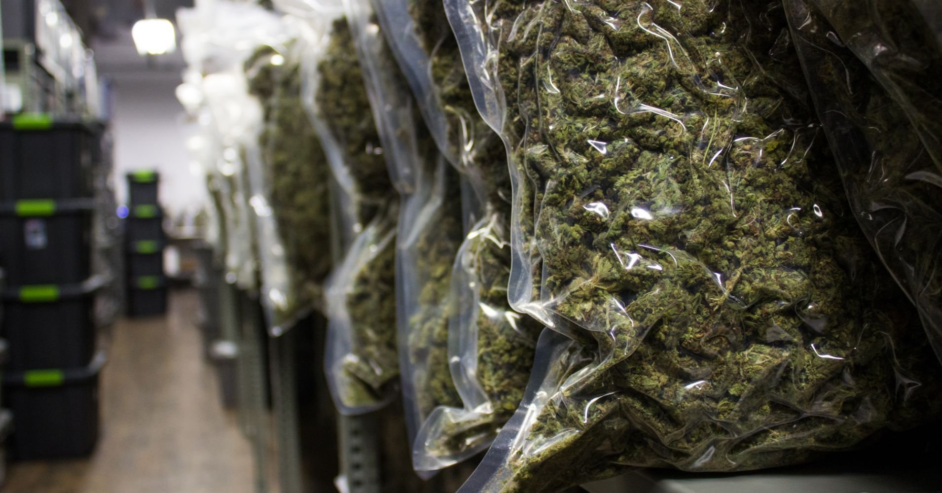 Marijuana stocks could see a midterm boost if Michigan votes yes