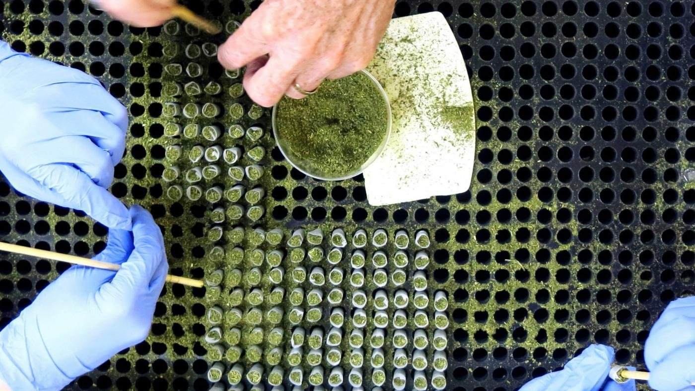 NIH is hiring a contractor to roll joints