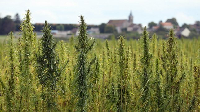 Congress is poised to finally lift its longstanding ban on industrial hemp