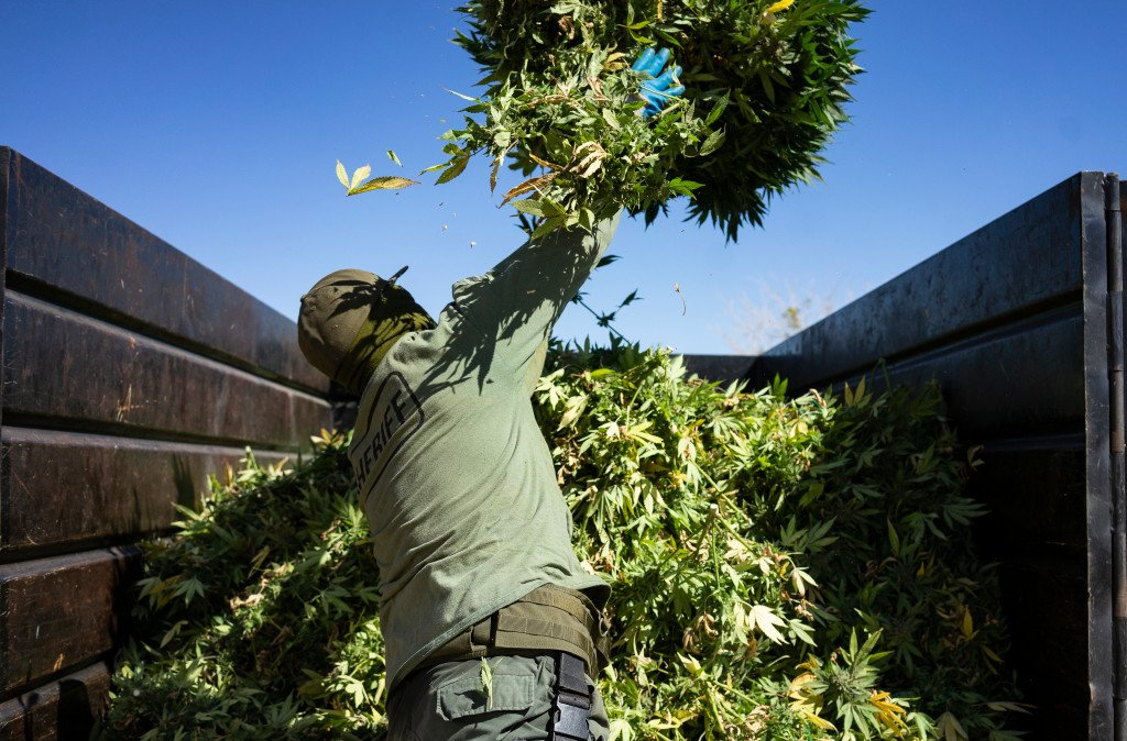 Legalizing marijuana was supposed to slow illegal activity in California. It hasn't