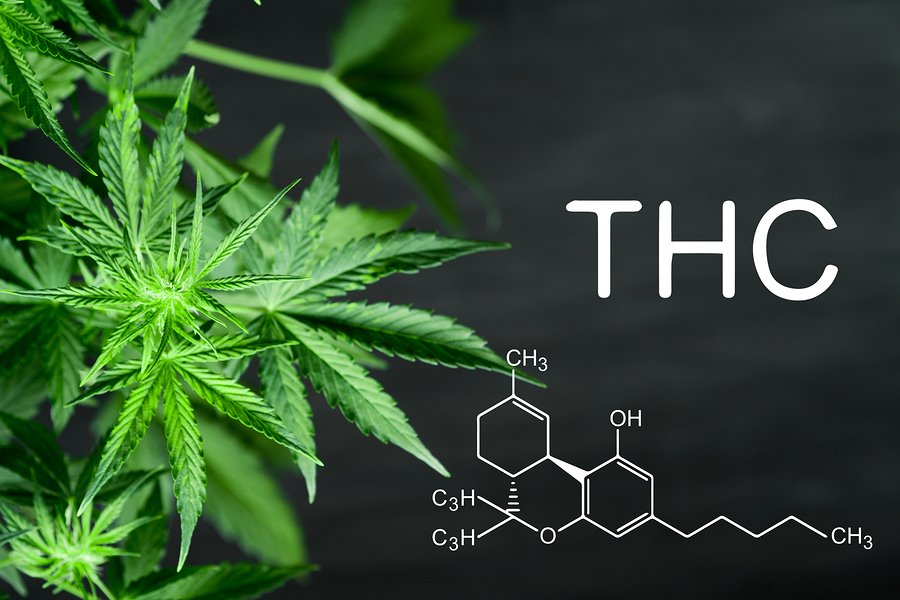 A bowl full of knowledge about what #THC is and find out how it works, what effects it has on the body, and more.