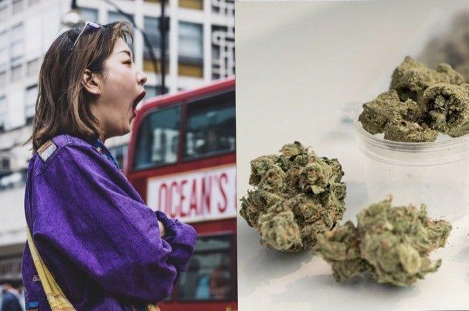 Cannabis to help fatigue. 5 high energy strains