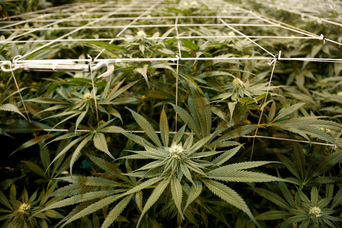 Black market will thrive if NJ puts $42-an-ounce tax on legal weed.