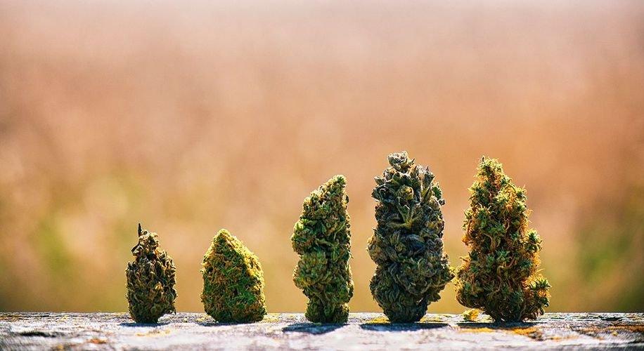 How Can We Destigmatize Cannabis?