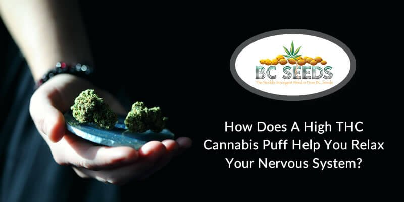 Know How High THC Cannabis Puff Help You Relax Your Nervous System