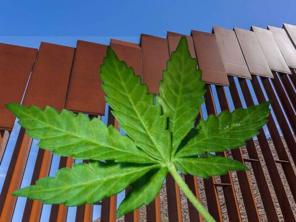 Legal Weed Did More to Stop Drug Smuggling Than Any Wall