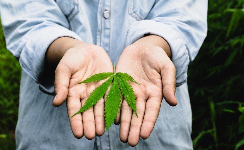 Marijuana: A Harmful Drug or Nature's Most Miraculous Medicine?
