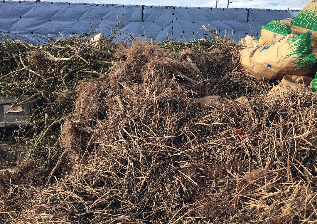 Medical Marijuana Waste Disposal Options In California   Gaiaca