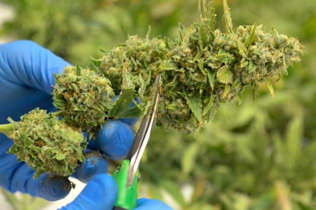New Mexico Marijuana Legalization Bill Headed to House Floor