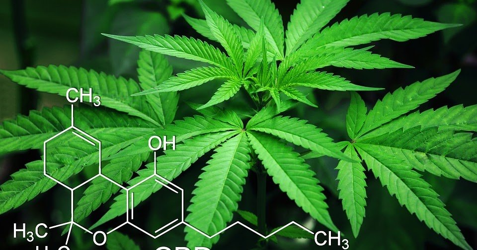 Patients Are Seeking Medical Marijuana Recommendations For Mood-Related Conditions