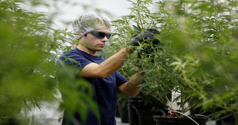 Marijuana is the fastest-growing industry in the US job market, according to a new report. The US added 64,389 full-time legal cannabis jobs in 2018, according to a new report. That outpaces growth in other sectors in the job market. Job openings in the cannabis industry have also surged.