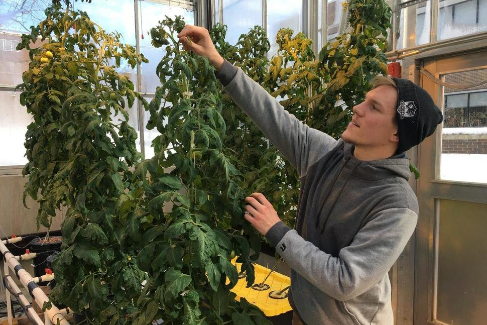 Higher Education: U.S. Colleges Add Cannabis to the Curriculum