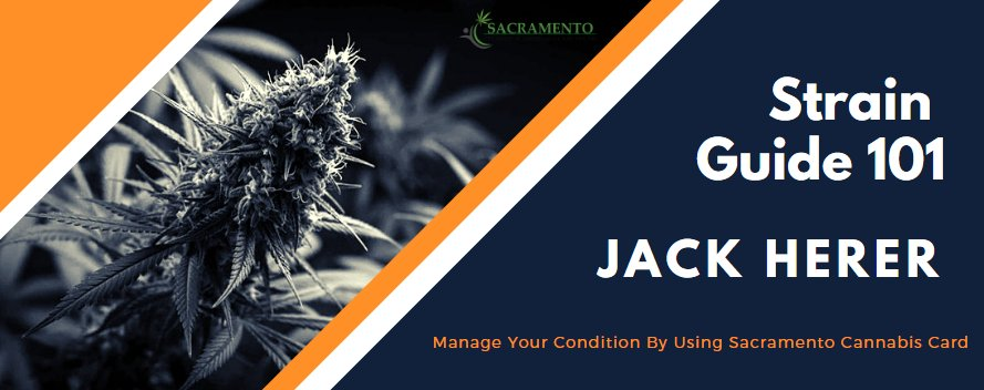 Manage Your Condition Using Jack Herer with a Sacramento Cannabis Card