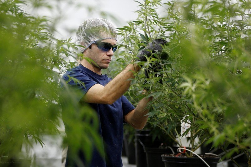 Marijuana is the fastest-growing industry in the US job market, according to a new report   Markets Insider
