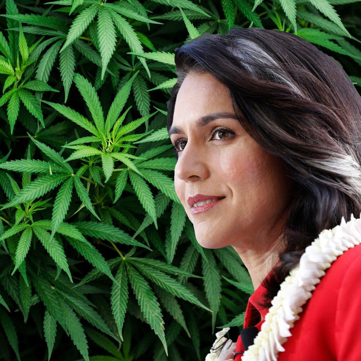 Tulsi Gabbard wants Congress to completely lift federal marijuana prohibition
