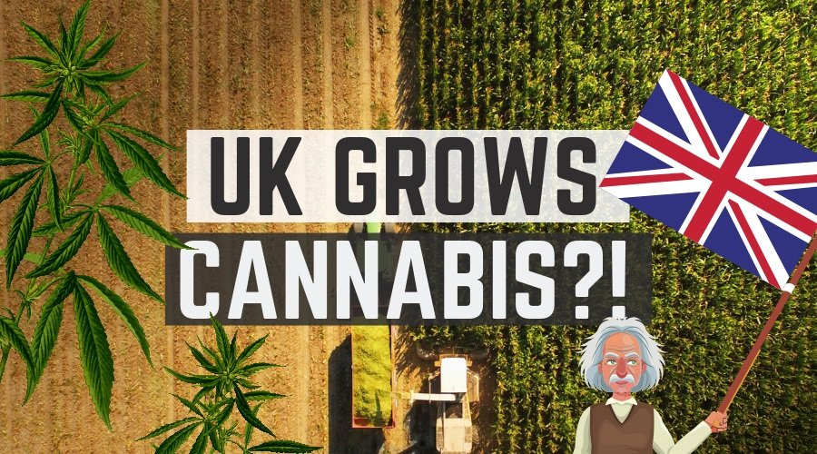 You could not make this sh&t up. UK prime ministers husband makes millions from UK grown weed, so too does the drugs minister while we are prosecuted for doing the same. Did anyone else know this?!
