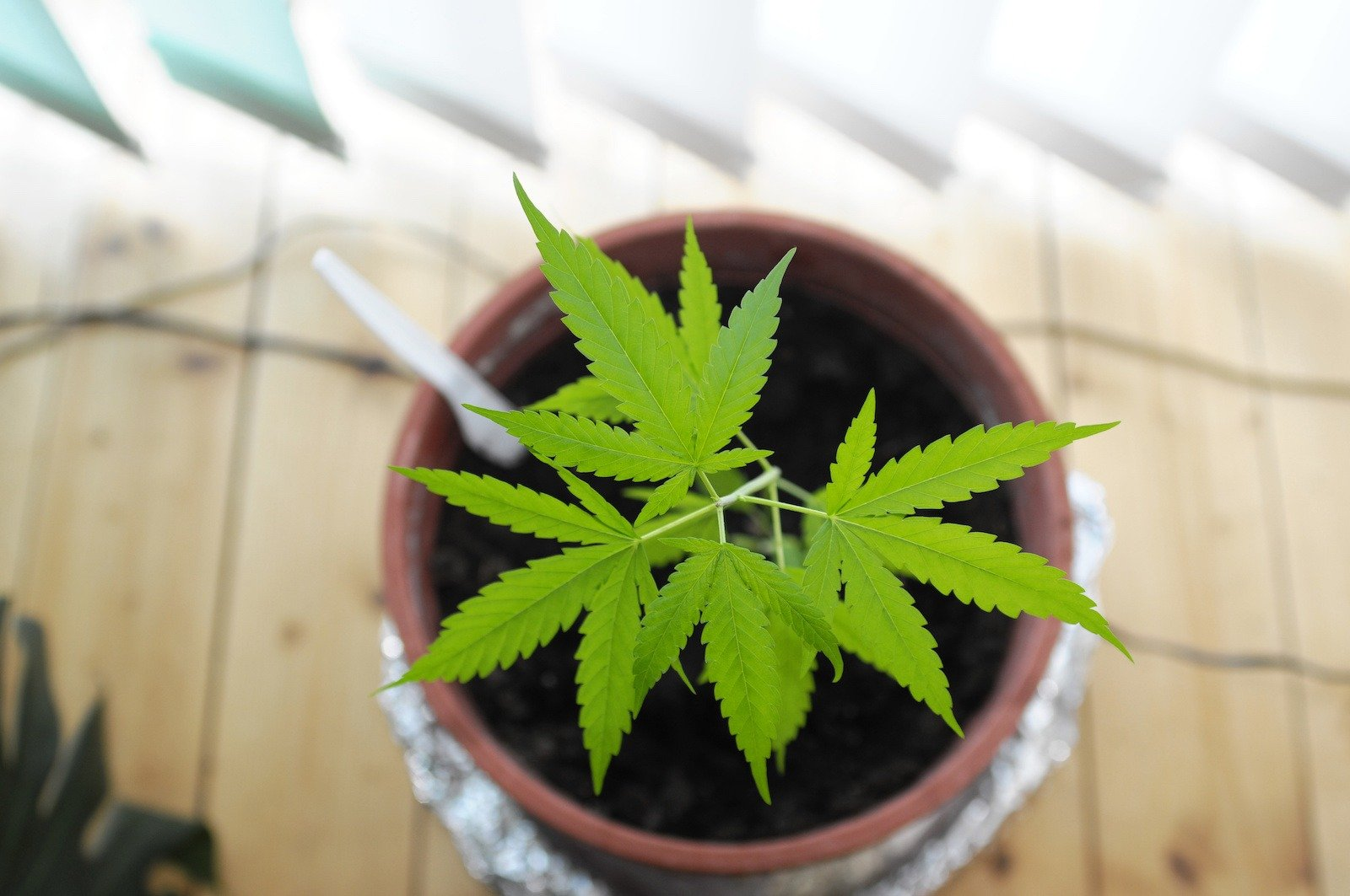 5 Things You Need to Start Growing Cannabis at Home