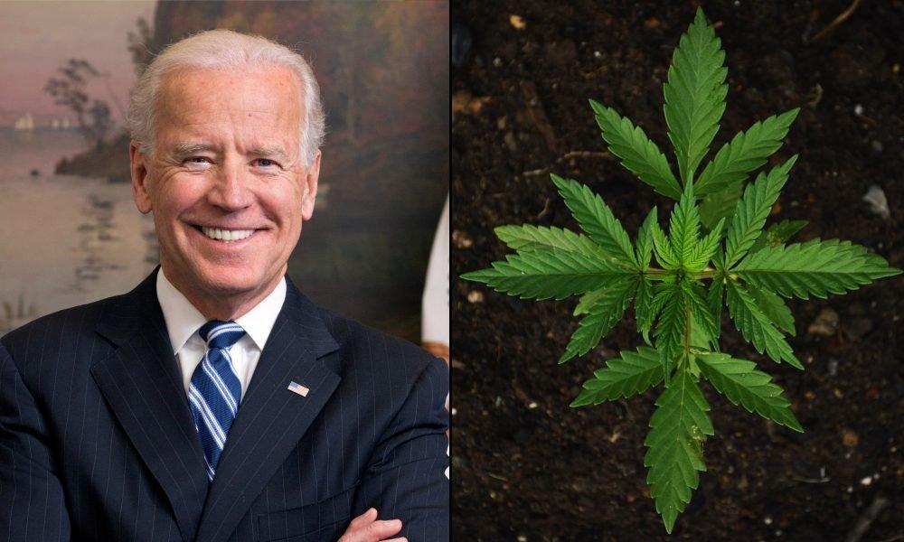 Joe Biden Endorses Marijuana Decriminalization And Rescheduling—But Not Legalization