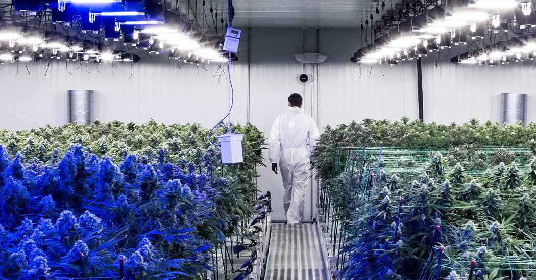 Marijuana Legalization Hits a Wall: First in New Jersey, Then in New York