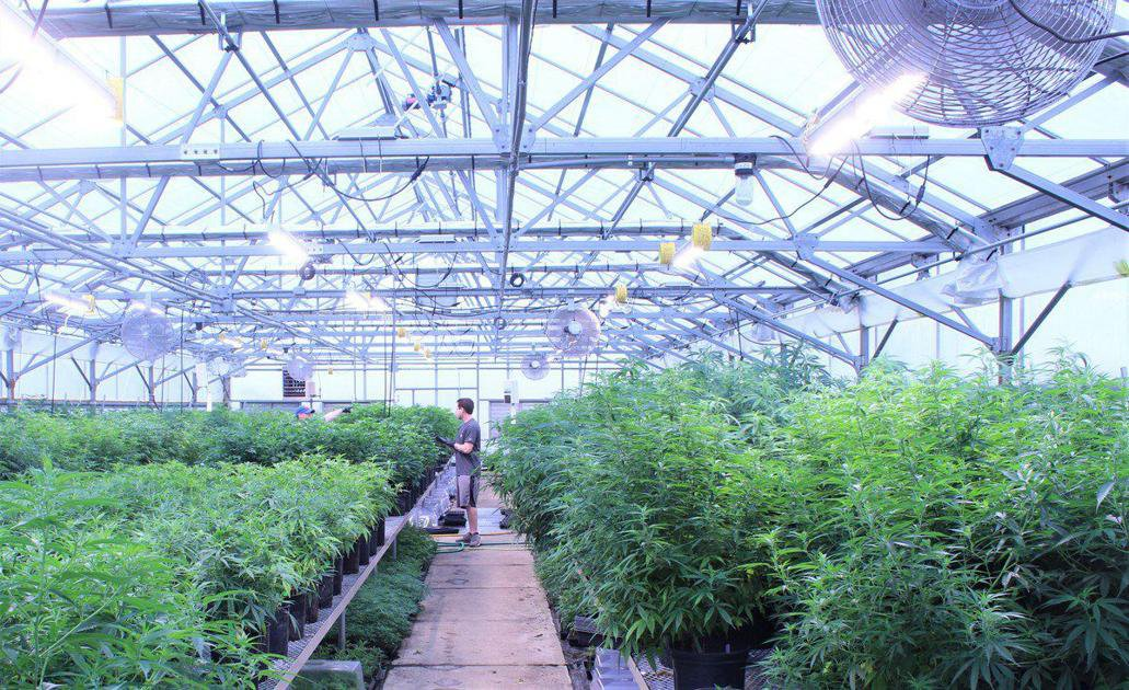 Hemp Wanted: Banks along with state, federal leaders see crop's potential