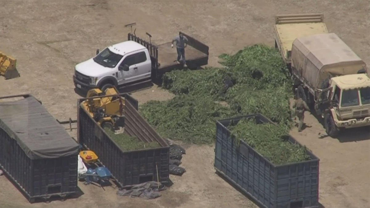 Reports of HUGE police raids on cannabis farms in Riverside County! Search warrants served in Anza, Temecula, Perris, and Hemet! Be careful out there today!!!