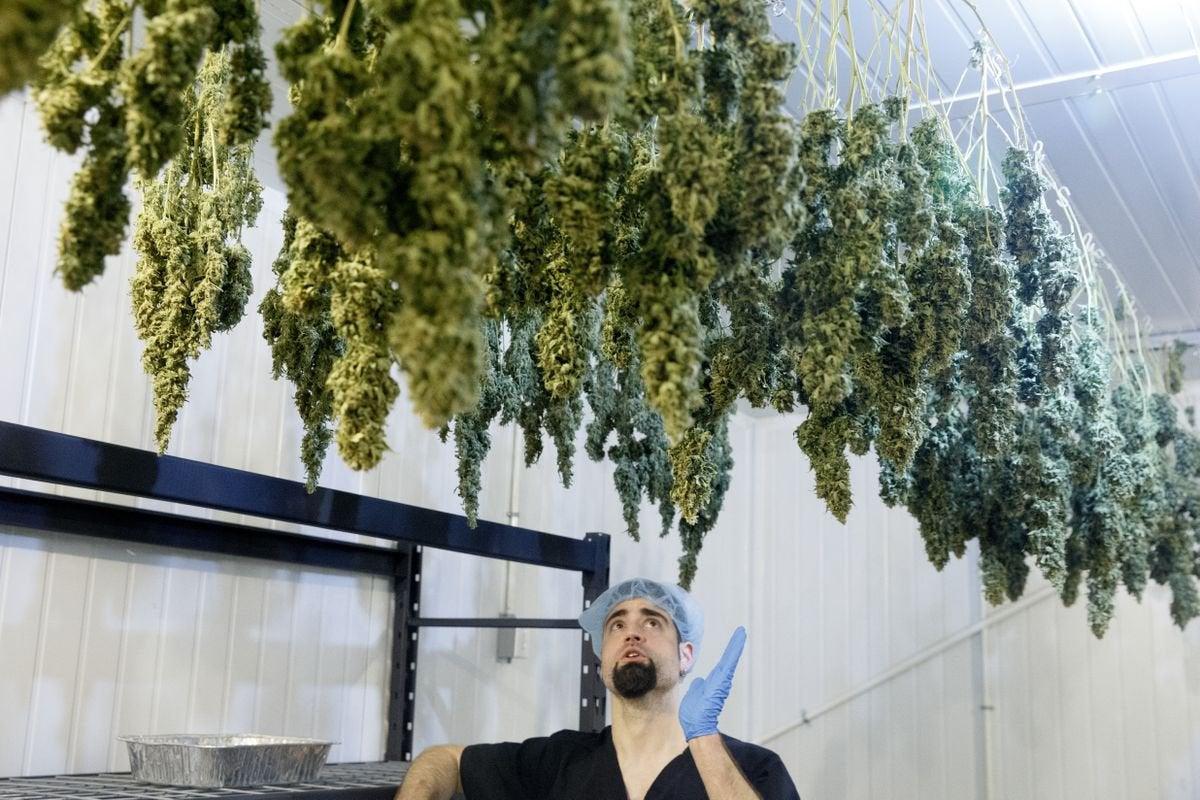 NJ: Why wait to vote on marijuana? We should create good-paying pot jobs now, entrepreneur says.