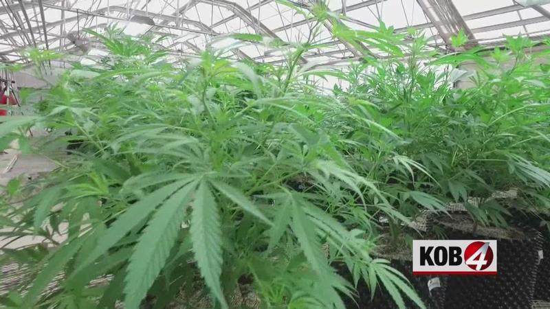 NM to begin push to legalize recreational marijuana